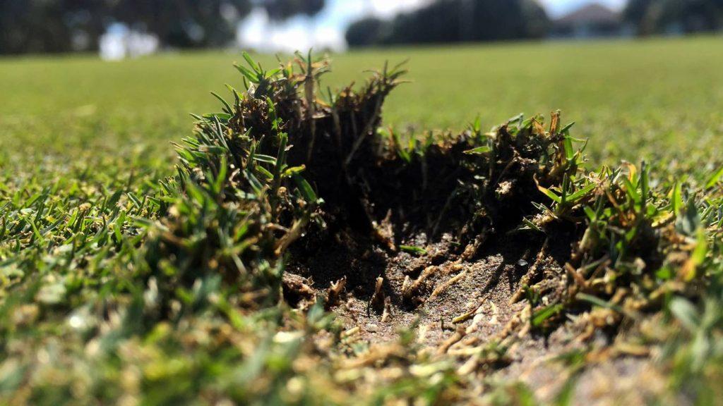 golf-rules-damage-repair-on- putting-greens
